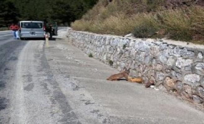Avını Yerken Görüntülendi