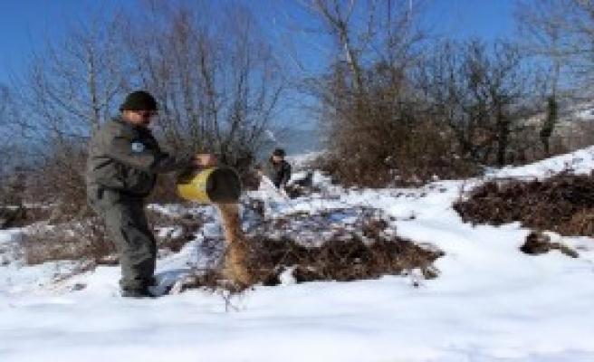 Karda Yiyecek Bulamayan Hayvanlar İçin Yemleme Yapıldı