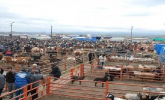 Şap Hastalığı Hayvan Pazarları Kapattırdı