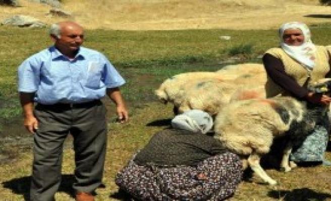 Kitap Kurdu Kadın Çoban