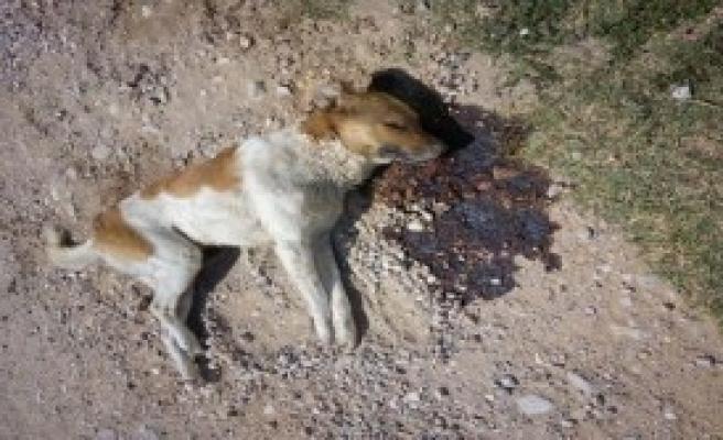 Köpek Ve Kedileri Zehirleyerek Öldürdüler