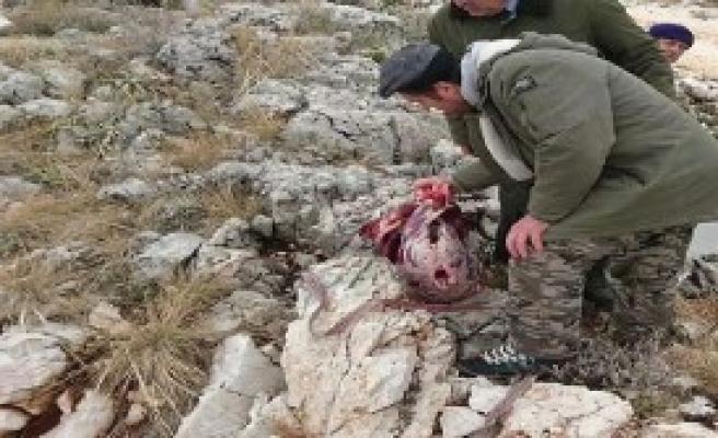 Avcılar Etini Taşırken Yakalandı