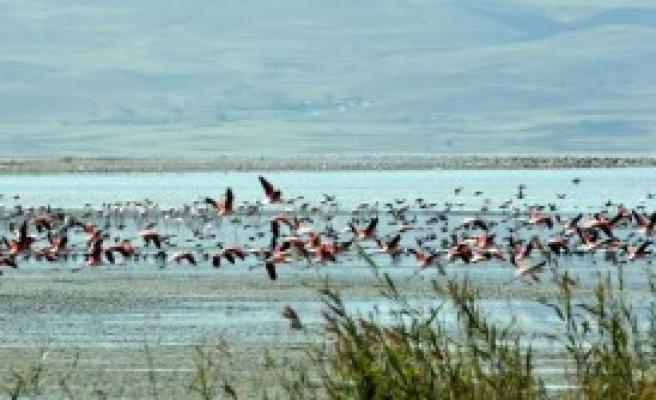 Kuraklık Flamingolara Yaradı