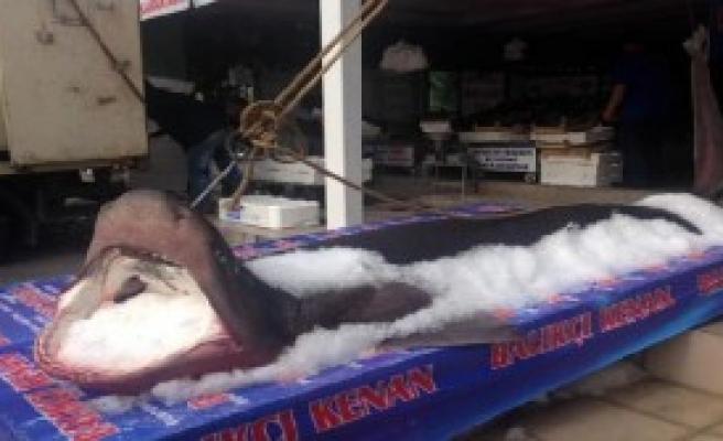 Marmara'da Jaws Alarmı!