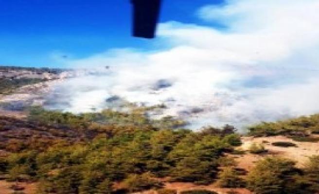 Milas'ta Orman Yangını Çıktı