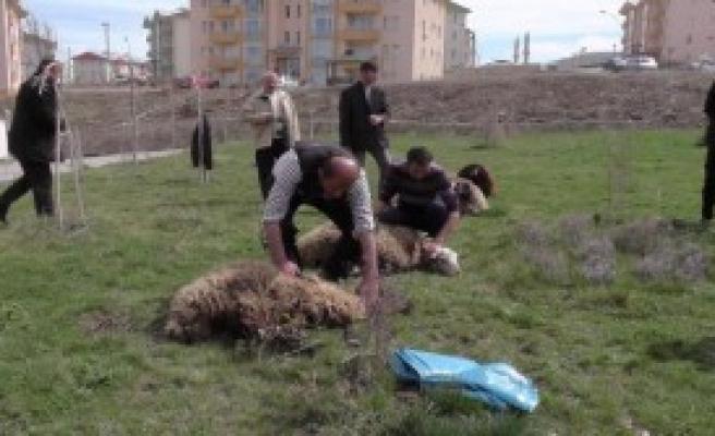 Afrin şehitleri için kurban kesildi