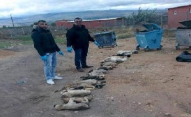 Çöp Konteynırında 18 Köpek Leşi Bulundu