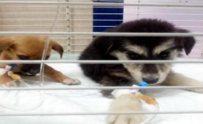 'Ölüm Kampı'ndaki Köpeklere Sıcak Yuva
