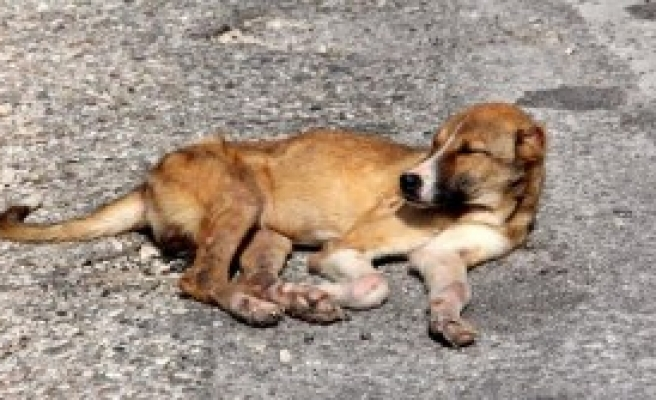 Ölüme Terk Edilen Köpekler Kurtuldu