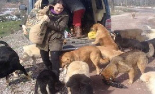 Ormana Terk Edilen Köpeklere Sahip Çıktılar