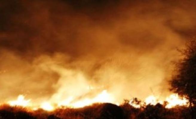 İzmir'de Ormanlık Alan Yandı