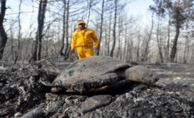 Osmaniye'deki Orman Yangınında Hayvanlar Telef Oldu
