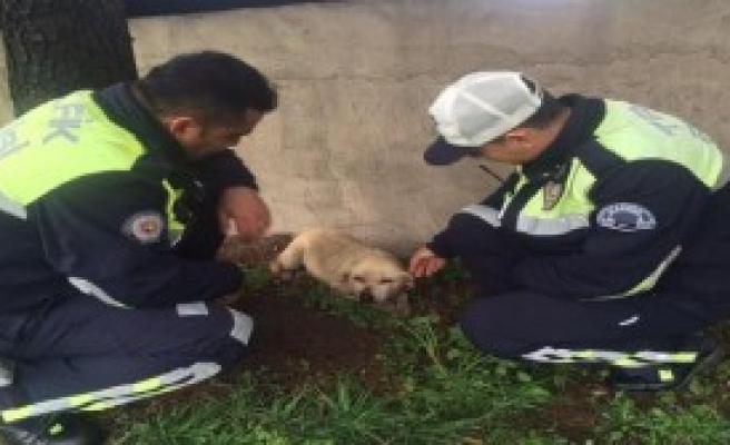 Otomobilin Çarptığı  Köpeğe Trafik Polisleri Sahip Çıktı
