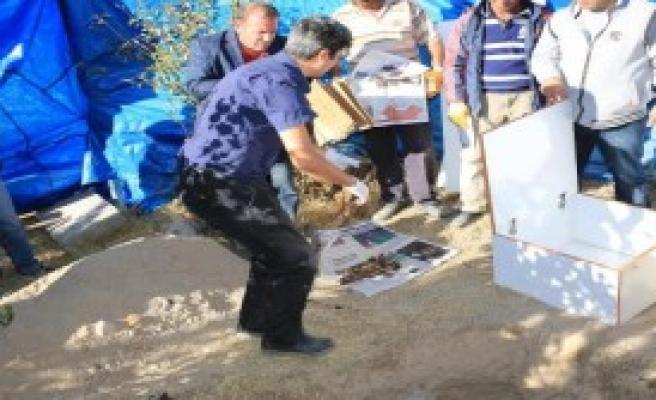Pkk'lının Mezarı Delil İçin Açıldı