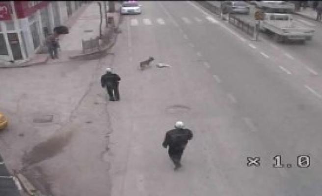 Polisi Görünce Avını Bırakıp Kaçtı