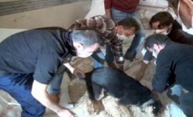 Saman Çuvallarından 115 Kilo Esrar Çıktı