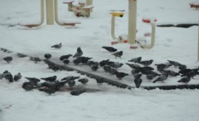 Samsun'da Kar Bitti, Yağmur Başladı