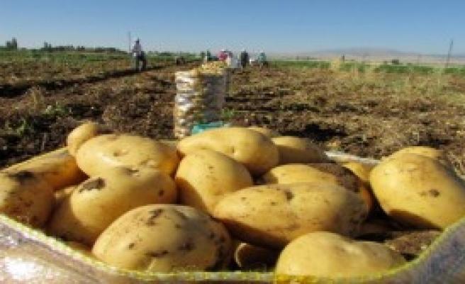 Sandıklı'da Patates Ekim Alanları Azalıyor