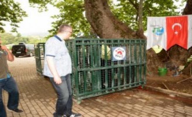 Savaş Mağduru Hayvanlar Karacabey'e Alışıyor