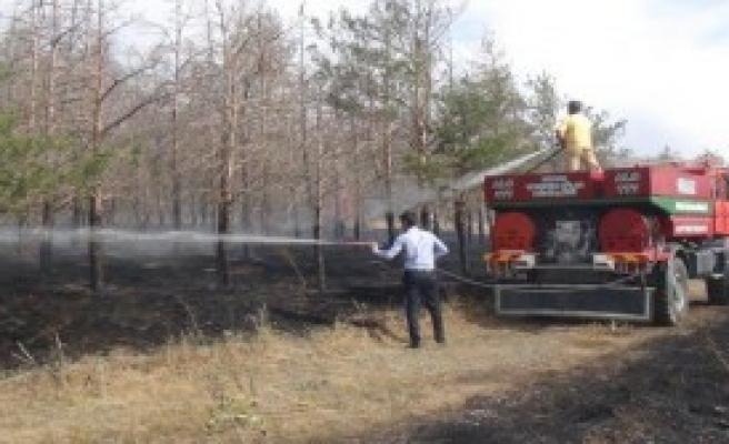 1000 Ağaç Zarar Gördü