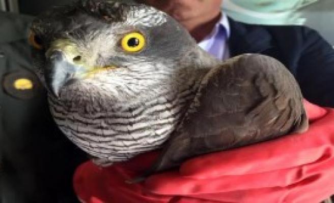 Yaralanan Kuş Tedaviye Alındı