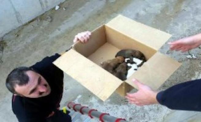 Soğuktan Donan 7 Yavru Köpek Telef Oldu