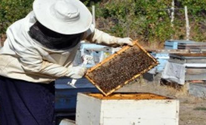 Yılda 1.5 Ton Organik Bal Üretiyor