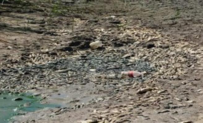 Sulama Göletinde Balık Katliamı