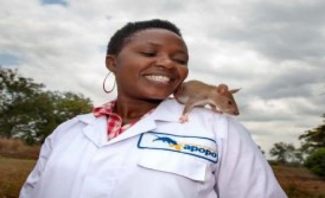 Sıçanlar Tüberküloz Teşhisi Koyuyor