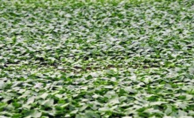Tokat'ta 150 Bin Sebze-Meyve Fidesi Dağıtıldı