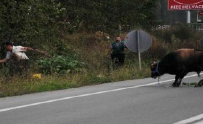 Trafikte 'Boğa' Var