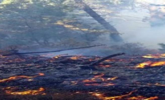 Turgutlu'da 1 Hektar Orman Yandı