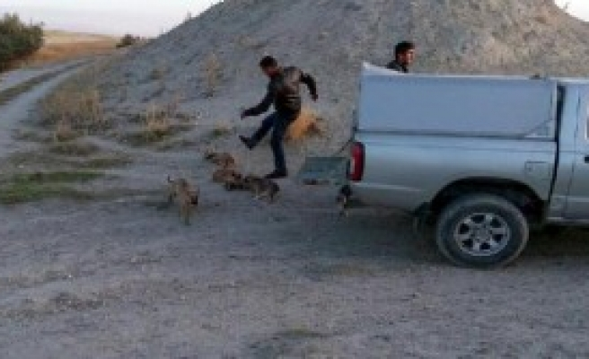 Ürgüp'te 'Köpek Tekmeleme' İnfial Yarattı