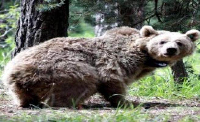 Yaban Hayvanı 'İhaleleri' Yargıya Gidiyor