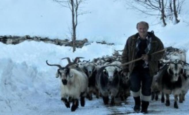 Çobanlar 5 Gün Sonra Kurtarıldı