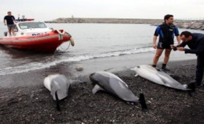 Zonguldak'ta 3 Yunus Ölüsü Sahile Vurdu