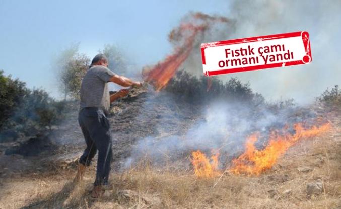 Bergama'da korkutan yangın