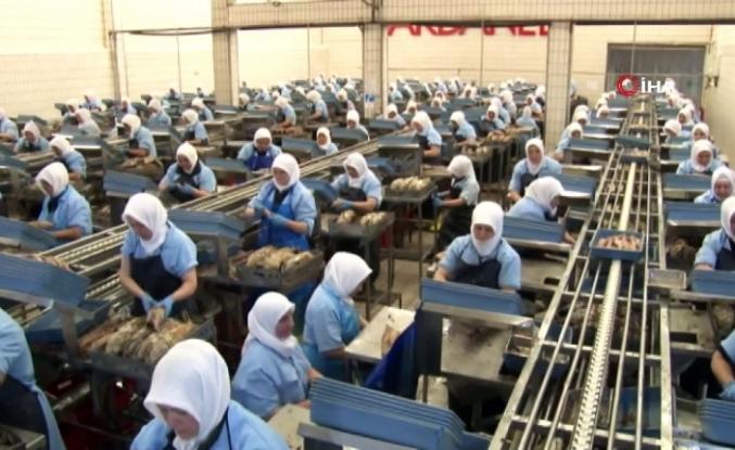 """Dardanel fabrikasındaki """"kapalı devre çalışma"""" sistemi sona erdi"""