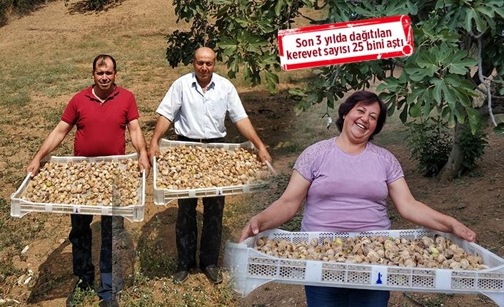 Büyükşehir'den tarıma 'kerevet' desteği