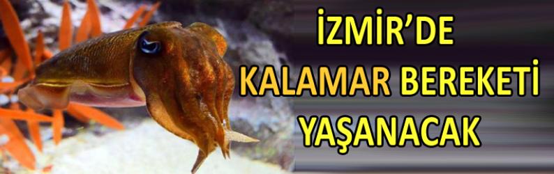 İzmir'de 1,5 milyon kalamar