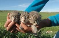 İlginç olay! Diyarbakır'da leoparlar görüldü
