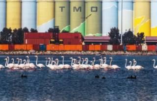 İzmir Deniz Ticaret Odası yarışması sonuçlandı