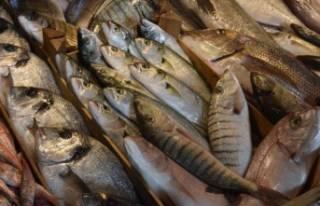 İzmir'de sağanak balığı da vurdu