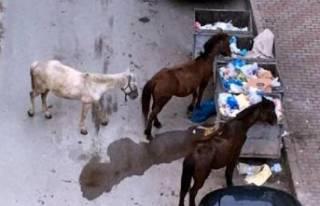 İzmir'de sahipsiz atlar için yardım çağrısı