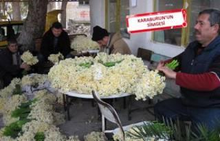 Nergis çiçeği üreticileri zorda