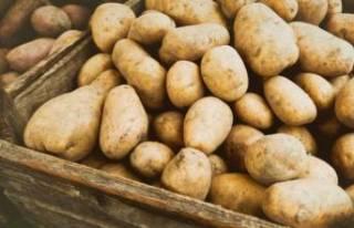 Hükümetten patates fiyatı için yeni adım!