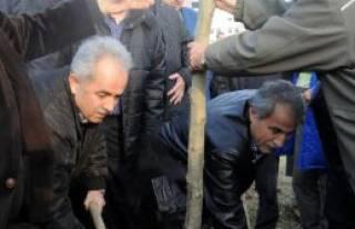 Yalova'da 200 Çınar Fidanı Dikildi
