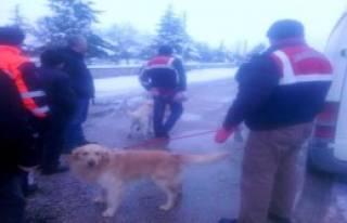 4 Gündür Kayıp Adam Köpekle Aranıyor