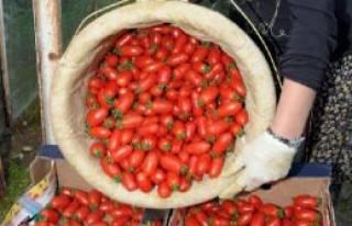 Alanya'da Üretici Örtü Altına Yöneldi