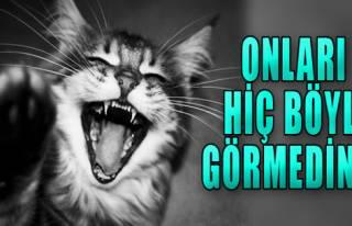 Kediler de Güler